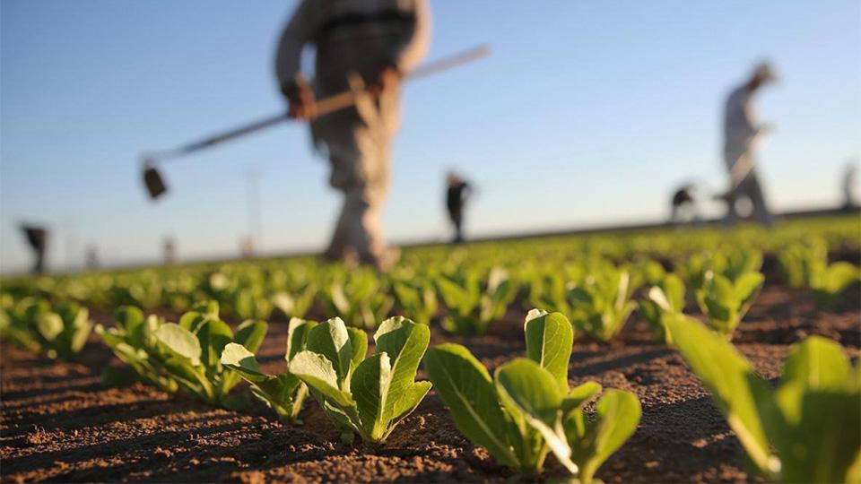 Veliki broj Beograđana živi od poljoprivrede – i njima je potrebna pomoć